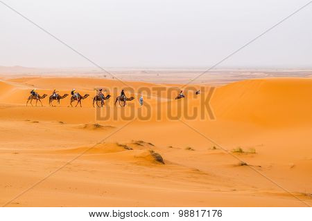 Dunes Erg Chebbi near Merzouga, Morocco - Camels caravan during a tour into the erg