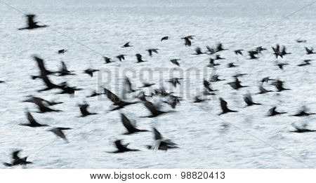 The Flight Of The Cormorant