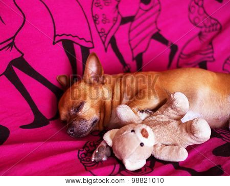 Dog And Toy On A Violet Blanket