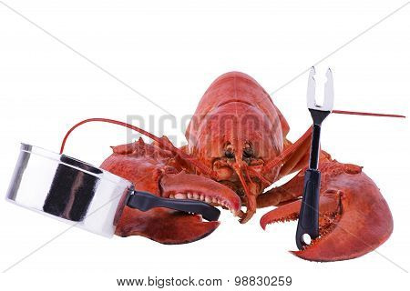 Humorous Cooked Lobster