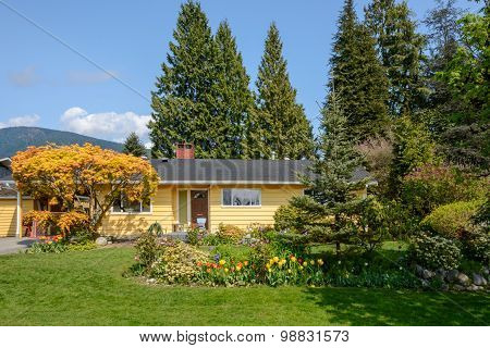 Cozy yellow house with yellow tree and beautiful landscaping on a sunny day. Home exterior.