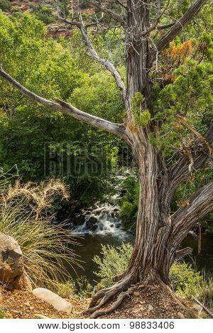 The beauty and Diversity of Sedona Arizona