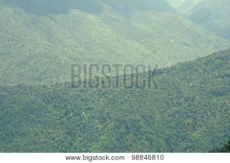 Mountains covered with the forest