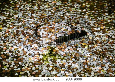 Coins In A Pond In Kyoto, Japan For Good Luck