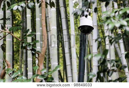 White Surveillance Camera In A Bamboo Forest