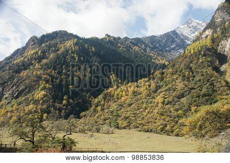 China Sichuan autumn scenery