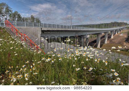 Wildflowers In Meadow Near  New Highway Bridge On Forest Road.
