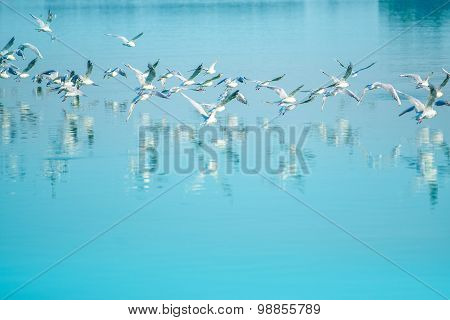 Flock Of Seagulls Flying Over Lake