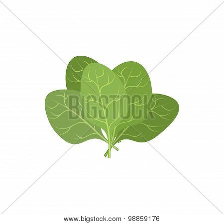 Spinach Leaves On A White Background. A Bunch Of Green Plants. Vector Illustration Of Veggie Plants