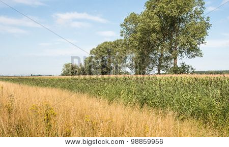 Colorful Rural Landscape In The Summer Season