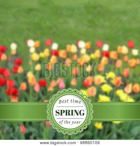 Spring blurred poster with tulips.