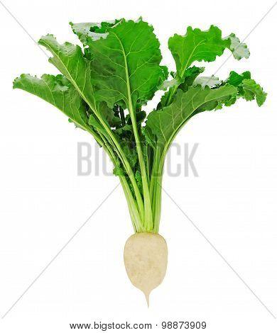 Fresh sugar beet with leaves
