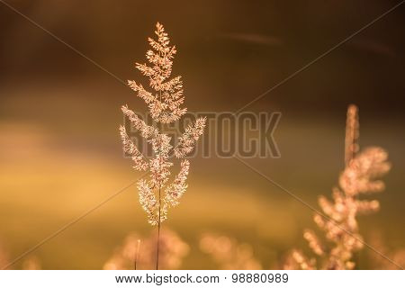 Summer Bokeh meadow with one Blade of Grass