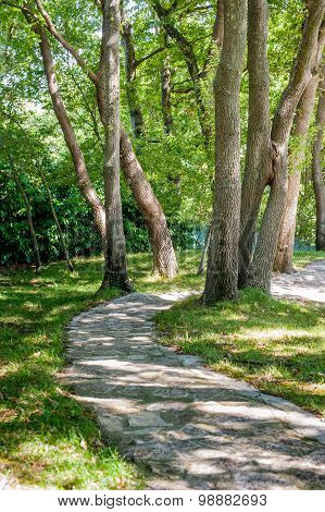 Stone Path Between Green Trees