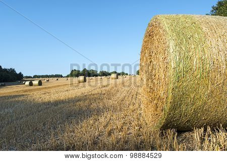 Straw Bales After Harvest On A Field