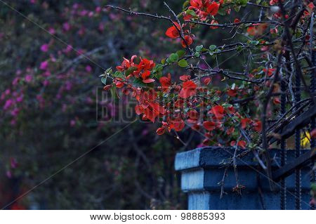 Branch with red flowers in the Gothic style