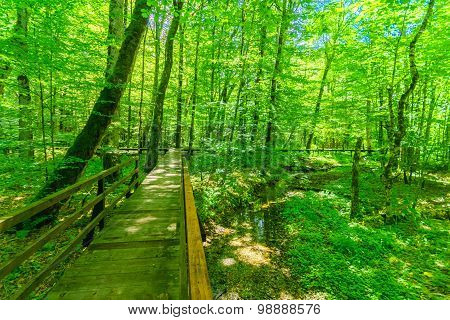 A Wooden Footpath In In Lake Biograd