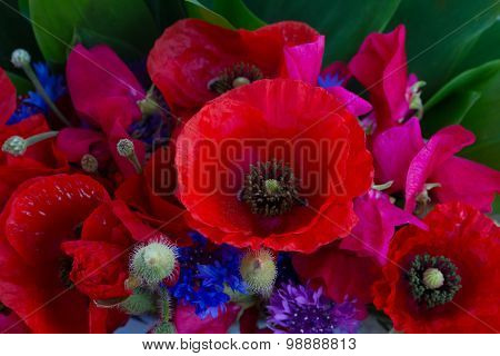 Poppy, sweet pea and corn flowers