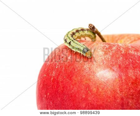 Green Caterpillar Creeps On Red Apple