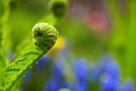 foto of fern  - Leaf fern - JPG
