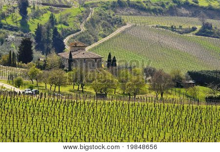 An old house surrounded by vineyard in Tuscany, Italy