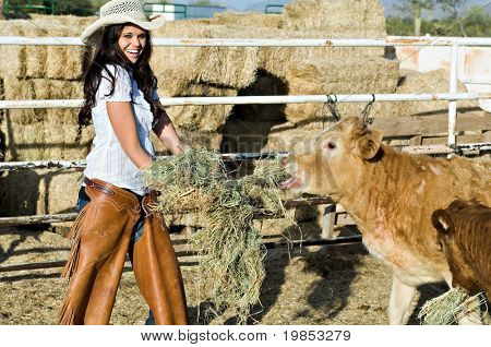 A beautiful cowgirl feeds hay to the cows
