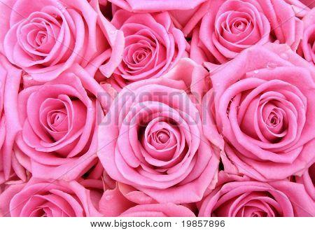 Pink rose background.