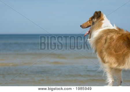 Dog Watching At Sea