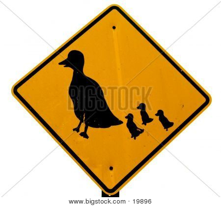 Duck Crossing Sign