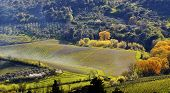 picture of farmworker  - Vineyard in Tuscany in spring - JPG