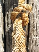 stock photo of cocoon tree  - Rope Knot Tied on the Trunk of the Tree on the Beach - JPG