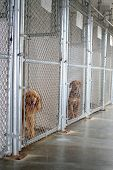 Animal Shelter Kennel