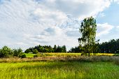 Summer Sunny Meadow With Blue Sky, Clouds And Trees poster