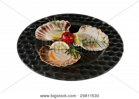 Fresh scallops, served on dark glass plate, with tomato and rosemary,  isolated on white