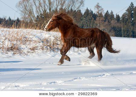 Brown Horse Run Gallop In Winter
