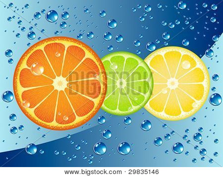 Citrus fruit slices in sparkling water
