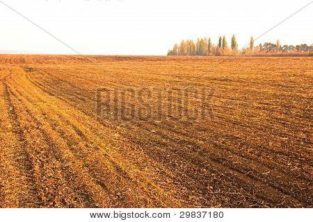 Campo otoño sembradas de cereales