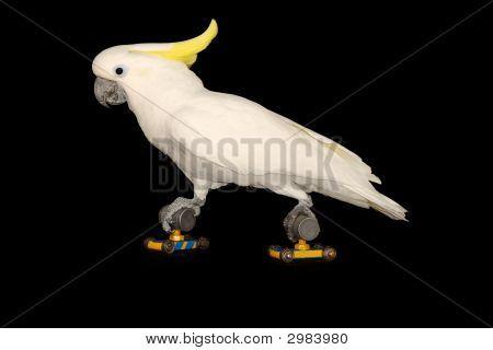 Parrot Is Running On Roller Skates