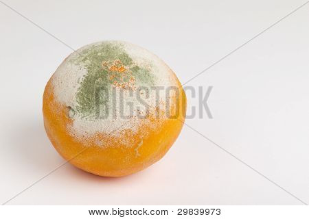 Moulded orange