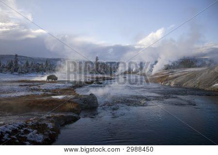 Yellowstone Geyser And A Buffalo