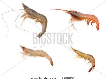 Various Kind Of Raw Shrimps