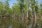 image of bayou  - Louisiana bayou on a sunny spring day - JPG
