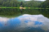 Panorama Of Synevyr Lake On Summer Morning. Gorgeous Scenery With Spruce Forest Reflecting On A Wate poster
