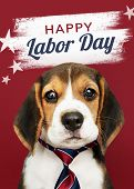 Happy labor day from cute Beagle poster