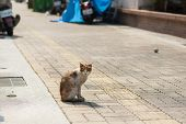 dirty stray cat stand and look at you on the street poster