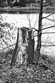 image of smut  - A cutout smutted stump on the lakeside - JPG