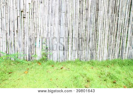 Bamboo Wall And Grass