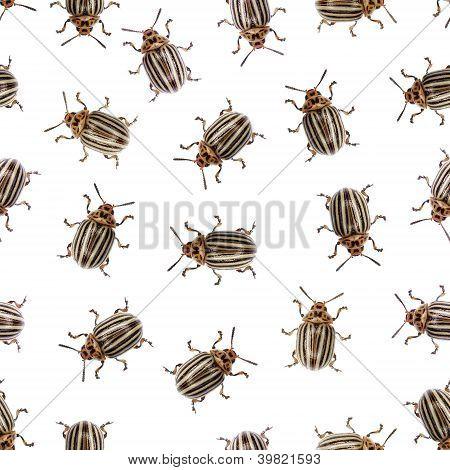 Seamless Texture - Colorado Beetle On A White