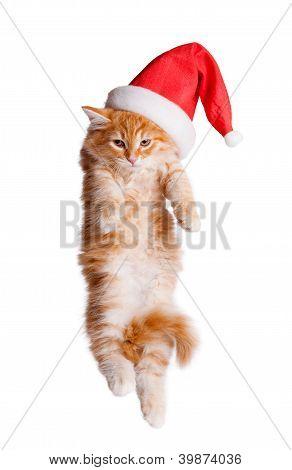 Small kitten in a santa hat.