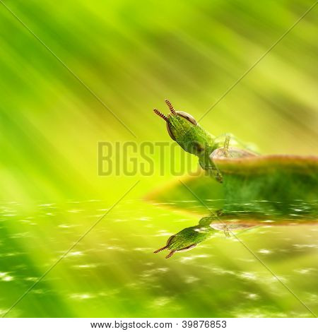 Grasshopper with light green